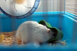 hamster, pet, cage